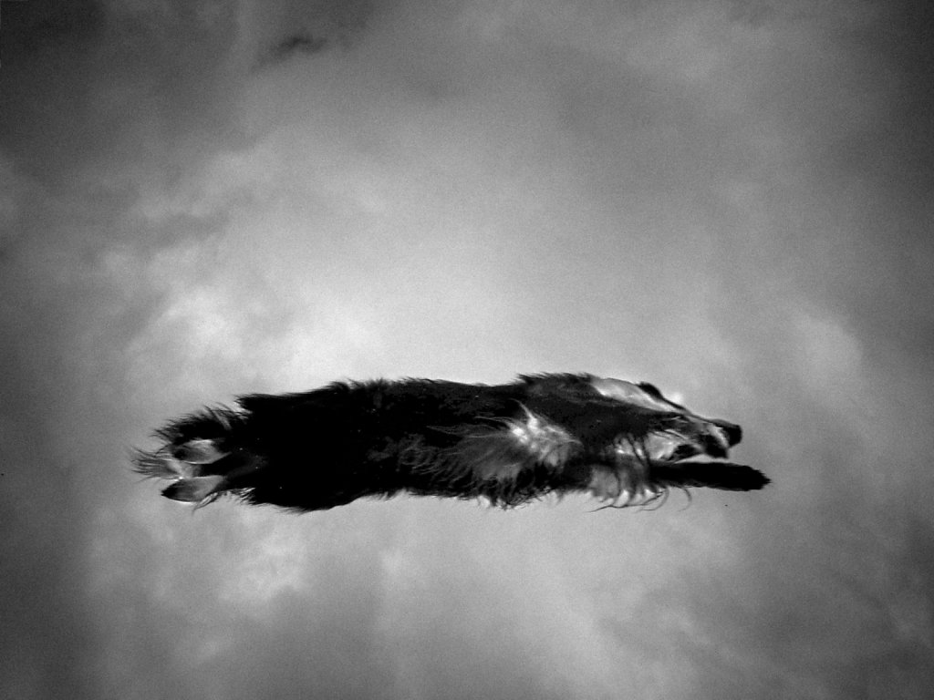 The Flying Dog.